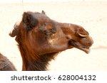 dromedary near the sky in oman  ... | Shutterstock . vector #628004132