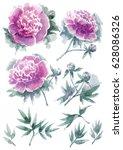 watercolor clip art of peonies | Shutterstock . vector #628086326