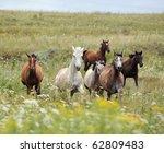Herd Of Wild Horses Running On...
