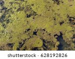 Small photo of Up Close View of an Algal Bloom
