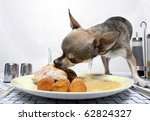 chihuahua eating food from... | Shutterstock . vector #62824327