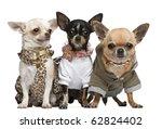 Three Chihuahuas  2 Years Old ...