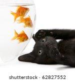 Close Up Of Black Kitten...