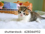 scottish fold kitten on white... | Shutterstock . vector #628366952