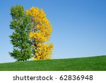 Yellow and green tree in the field against the blue sky. Autumn. - stock photo