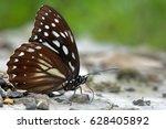 Taiwan Markings Eye Butterfly ...