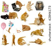 Stock photo cat collection isolated on white background the cats are with laptop dog balloons goldfish and 62846173