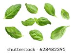 Fresh Basil Leaves  Isolated O...