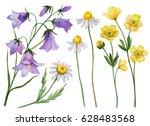 Watercolor Set Of Wild Flowers...
