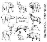 Stock vector hand drawn isolated contour of woodland animals wolf bear deer fox boar hare lynx 628570832