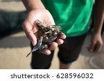 a boy showing an octopus... | Shutterstock . vector #628596032