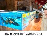 Lots Of Live Fish In Aquarium...