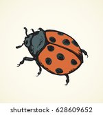 Big Cute Coccinellidae On White ...