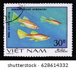 Small photo of MOSCOW, RUSSIA - APRIL 2, 2017: A post stamp printed in Vietnam shows Aquarium fish Gyrinocheilus aymonieri, circa 1980