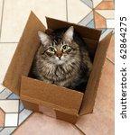 Stock photo cat sitting in a cardboard box 62864275