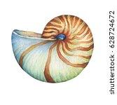 nautilus sea shell. marine...   Shutterstock . vector #628724672