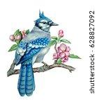 watercolor drawing of bluebird... | Shutterstock . vector #628827092