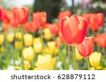 close up of beauty tulip in... | Shutterstock . vector #628879112