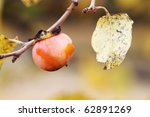 Small photo of American Persimmon fruit in the fall. Extreme shallow DOF.