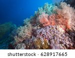 colorful camation tree corals... | Shutterstock . vector #628917665