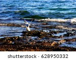 seagull in the shore  new... | Shutterstock . vector #628950332