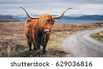 Hairy Scottish Yak On The Road...