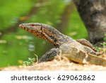 varanus bengales is on river... | Shutterstock . vector #629062862