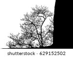 realistic tree silhouette on a... | Shutterstock . vector #629152502