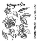 ink hand drawn set of magnolia... | Shutterstock .eps vector #629203322