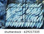 fresh fish. sea fishing. fish... | Shutterstock . vector #629217335