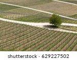 aerial of vineyard in spring...   Shutterstock . vector #629227502