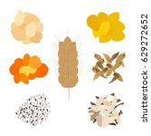 vector set of grains and seeds  ... | Shutterstock .eps vector #629272652