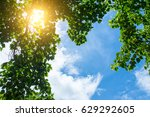 forest trees nature green wood... | Shutterstock . vector #629292605