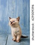 Stock photo white funny kitten at blue wood background vertical 629309396