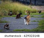 two stray cats nuzzling   one... | Shutterstock . vector #629323148