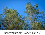 bright picture with green... | Shutterstock . vector #629415152