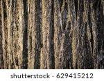 textured bark of trunk brown... | Shutterstock . vector #629415212