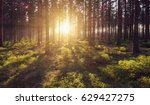 forest trees nature green wood... | Shutterstock . vector #629427275