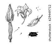 Zucchini Flower Hand Drawn...