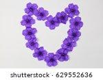 Ruellia Tuberosa Is A Purple...