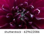 dahlia flower macro shot.... | Shutterstock . vector #629622086