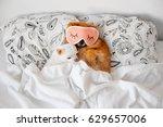 Cute  Funny Red Pomeranian...