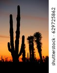 Desert Sunset With Silhouettes...
