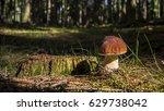 mushroom | Shutterstock . vector #629738042