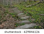 Stone Path Among The Flowers
