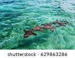 nurse sharks gathering in... | Shutterstock . vector #629863286