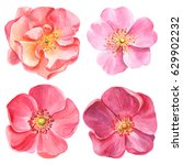 set of elements  pink roses ... | Shutterstock . vector #629902232