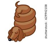 dachshund curling sleep vector...   Shutterstock .eps vector #629942108