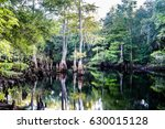 Green Swamp Florida