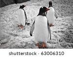 Three Penguins Standing Under...
